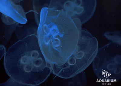 9184_jellyfish3_sml