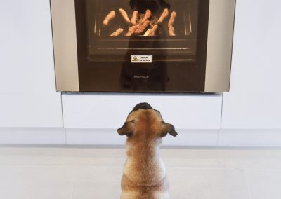 dog_oven_web