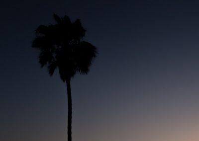 palmtreecaliweb