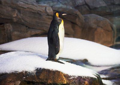 penguin2_sml