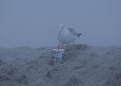 seagulls1web