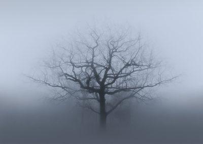 tree2fogweb