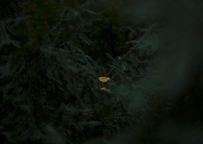 yellowleaf_web_sml